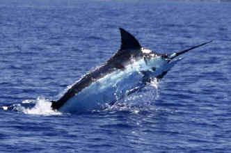 Hawaii fishing charter on Humdinger