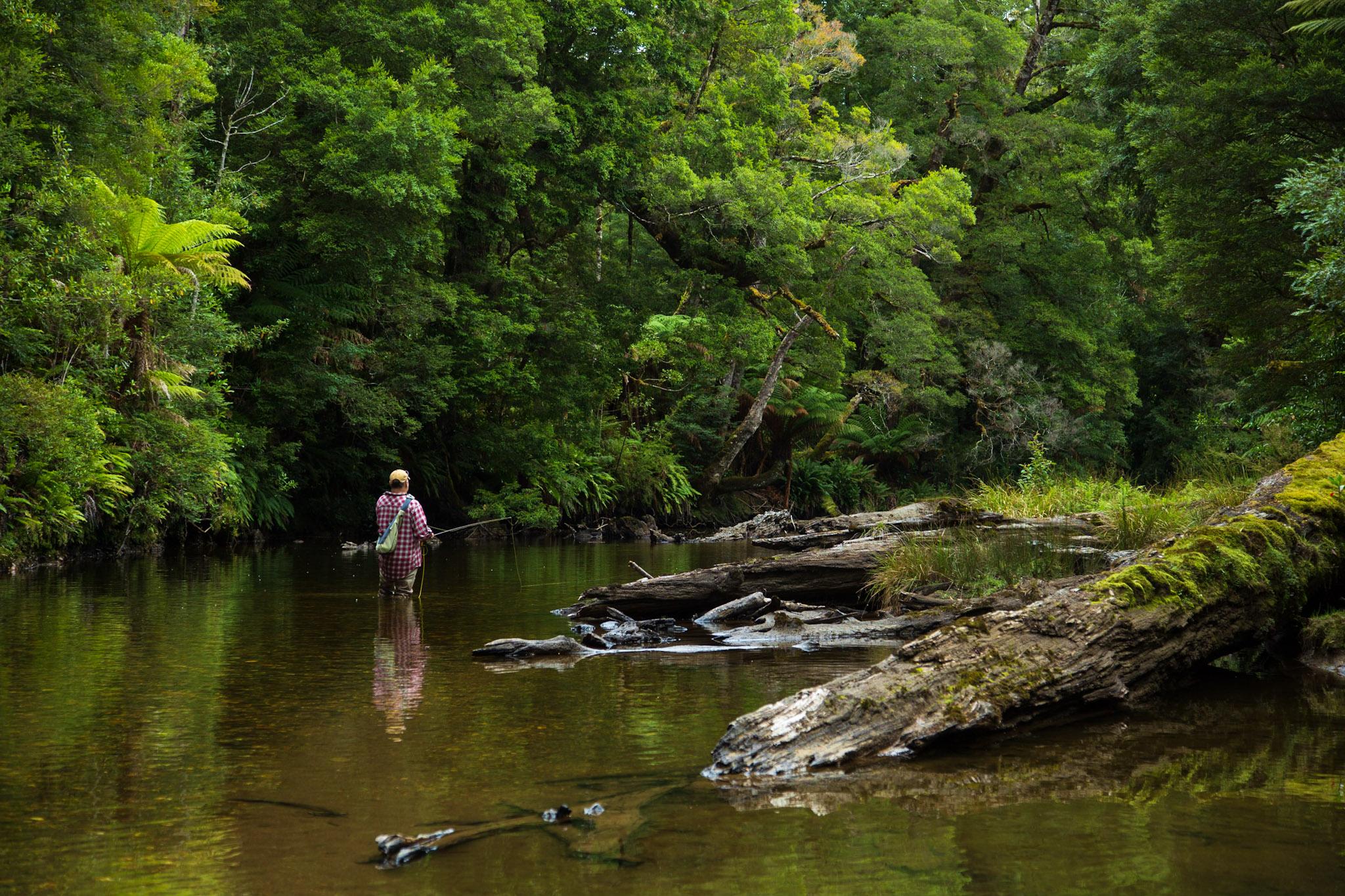 Dry fly fishing the Styx River, Tasmania