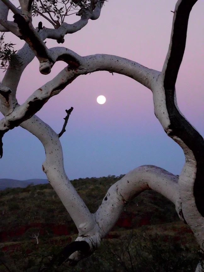 Pilbara moonset.