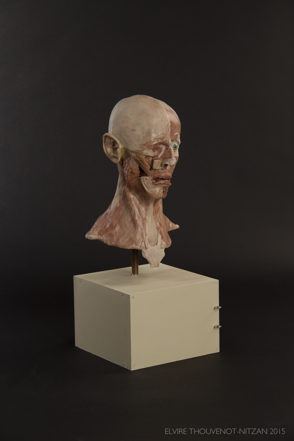 Elvire Thouvenot Anatomical Facial Sculpture 1 copy.png