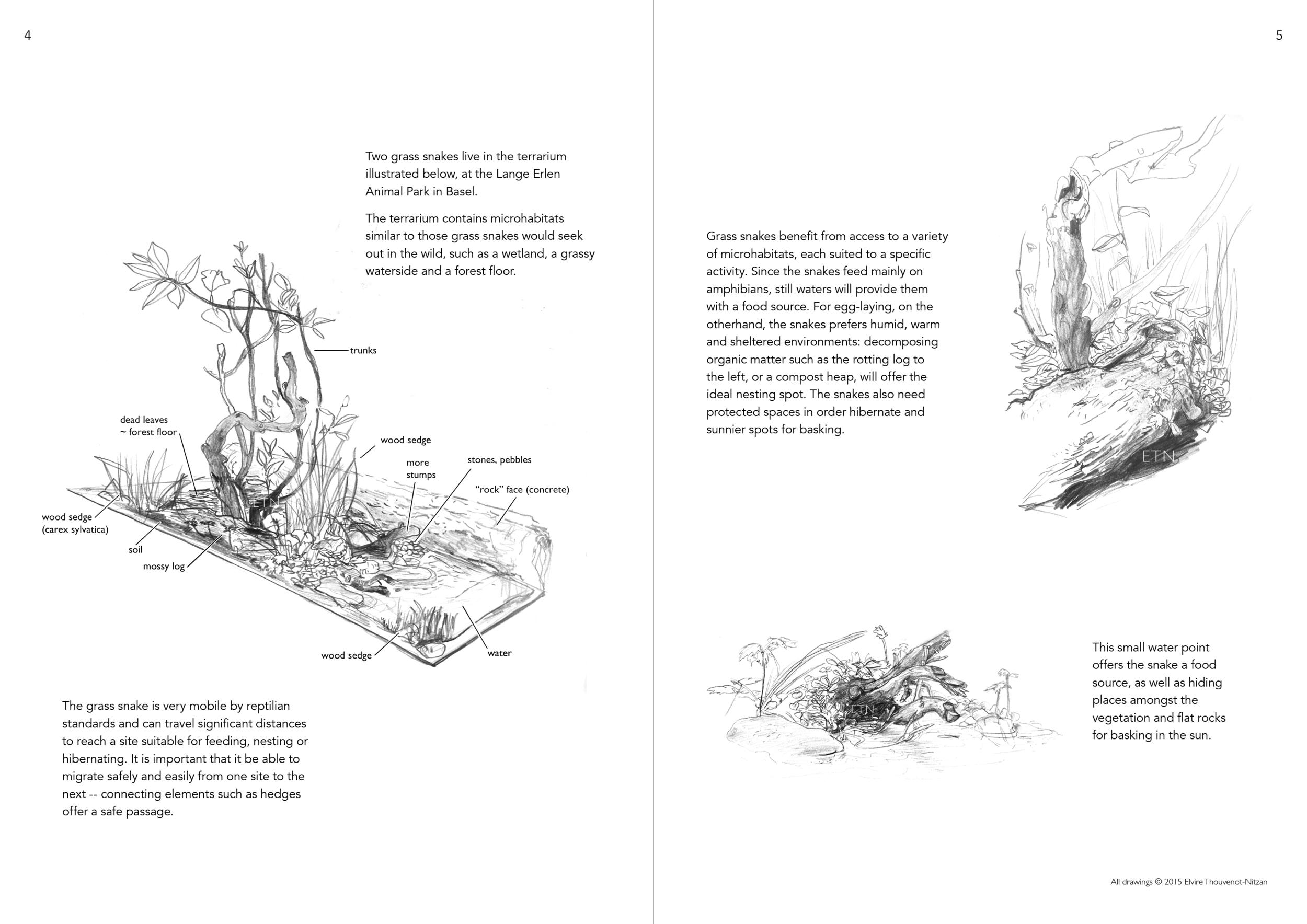 Elvire Thouveno Natrix Natrix Research3.png