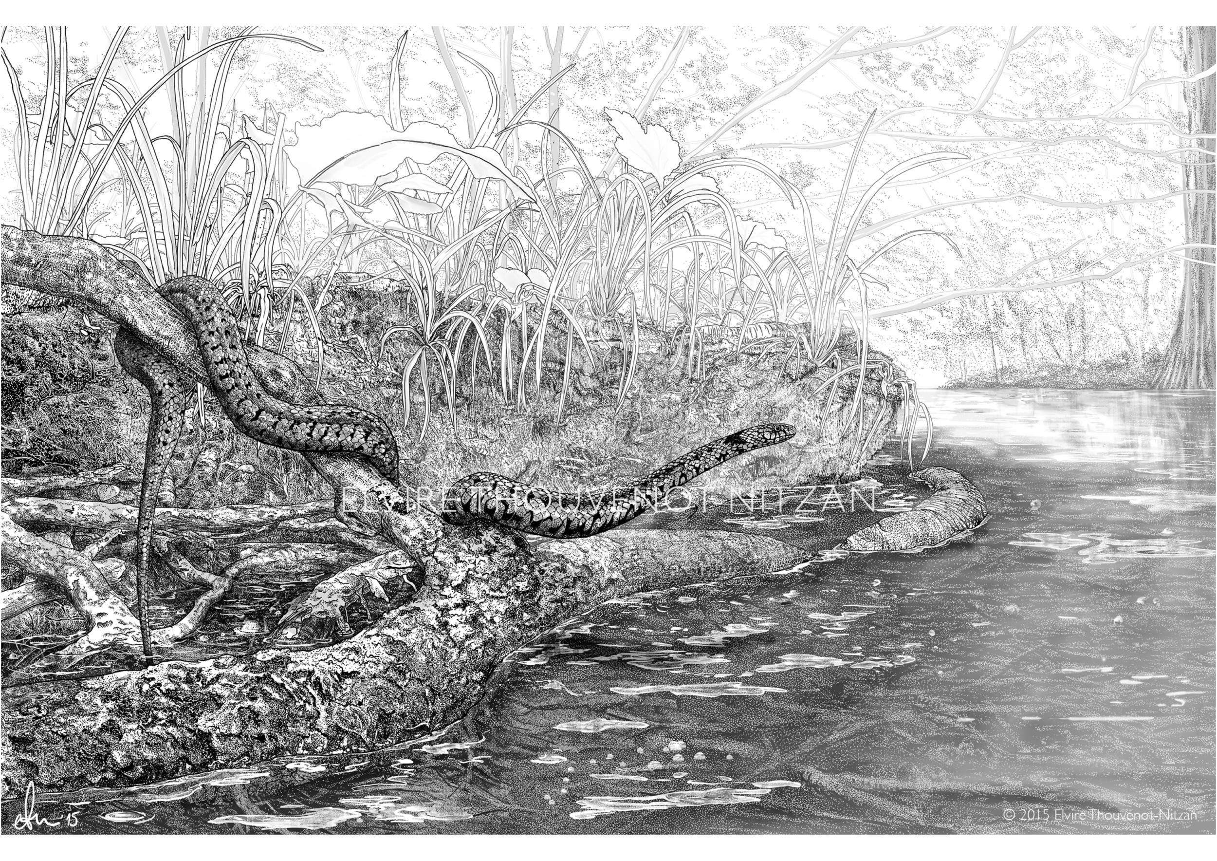 Elvire Thouveno Natrix Natrix Research15.png