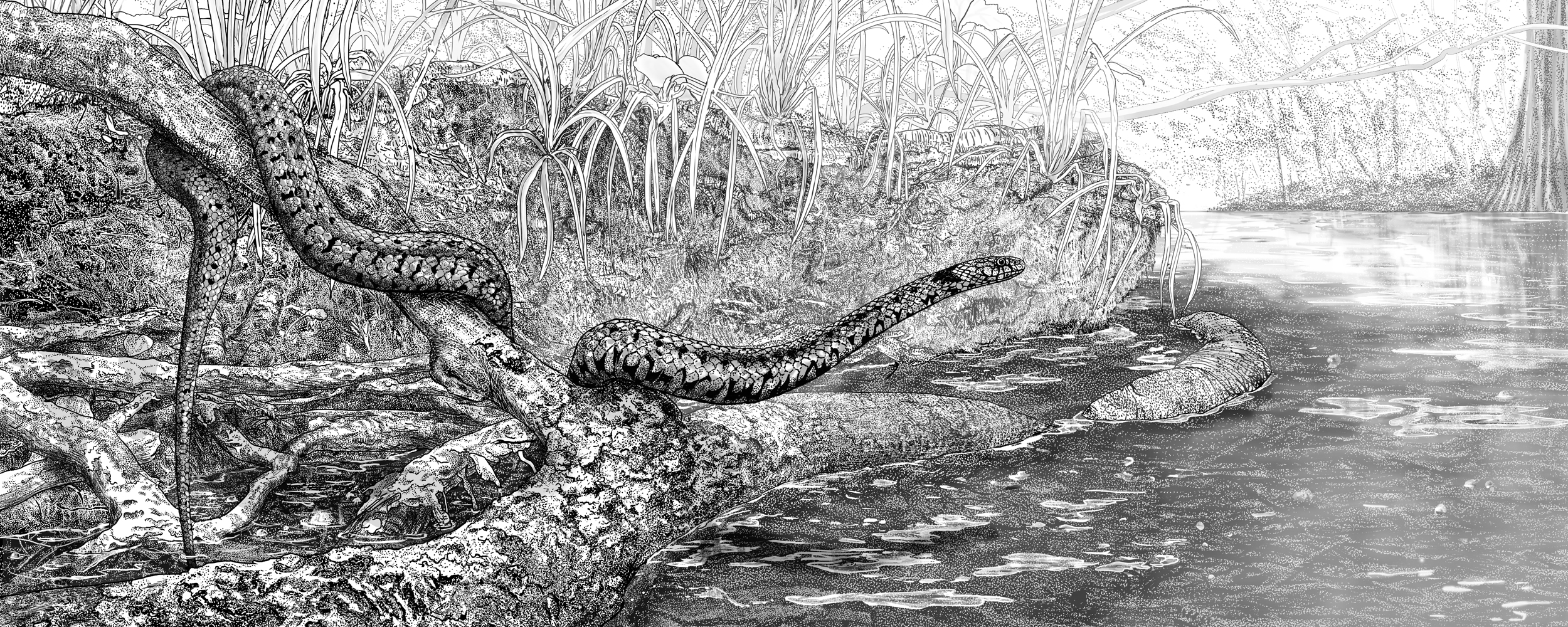Natural Science Illustration   A collection of traditional pen & ink illustrations.