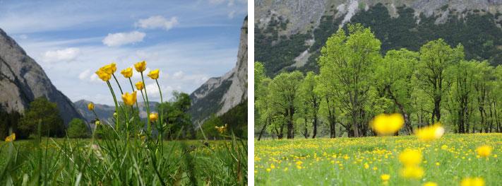Ähnliche Motive: Links die Blumen im Vordergrund, mittig vor einer idyllischen Bergwelt. Rechts die gleiche Wiese, aber hier ein anderer Bildausschnitt und die Bildschärfe liegt auf den Bäumen im Hintergrund. Der Bildhorizont ist bei beiden Bildern auf der gleichen Höhe, aber dennoch vermittelt das linke Bild mehr Weite, wirkt freundlicher, lebhafter und offener - vielleicht auch etwas brav und ordentlich, gesittet.