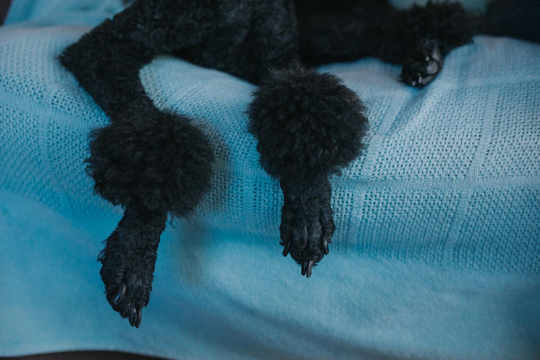 Poodles-95.jpg
