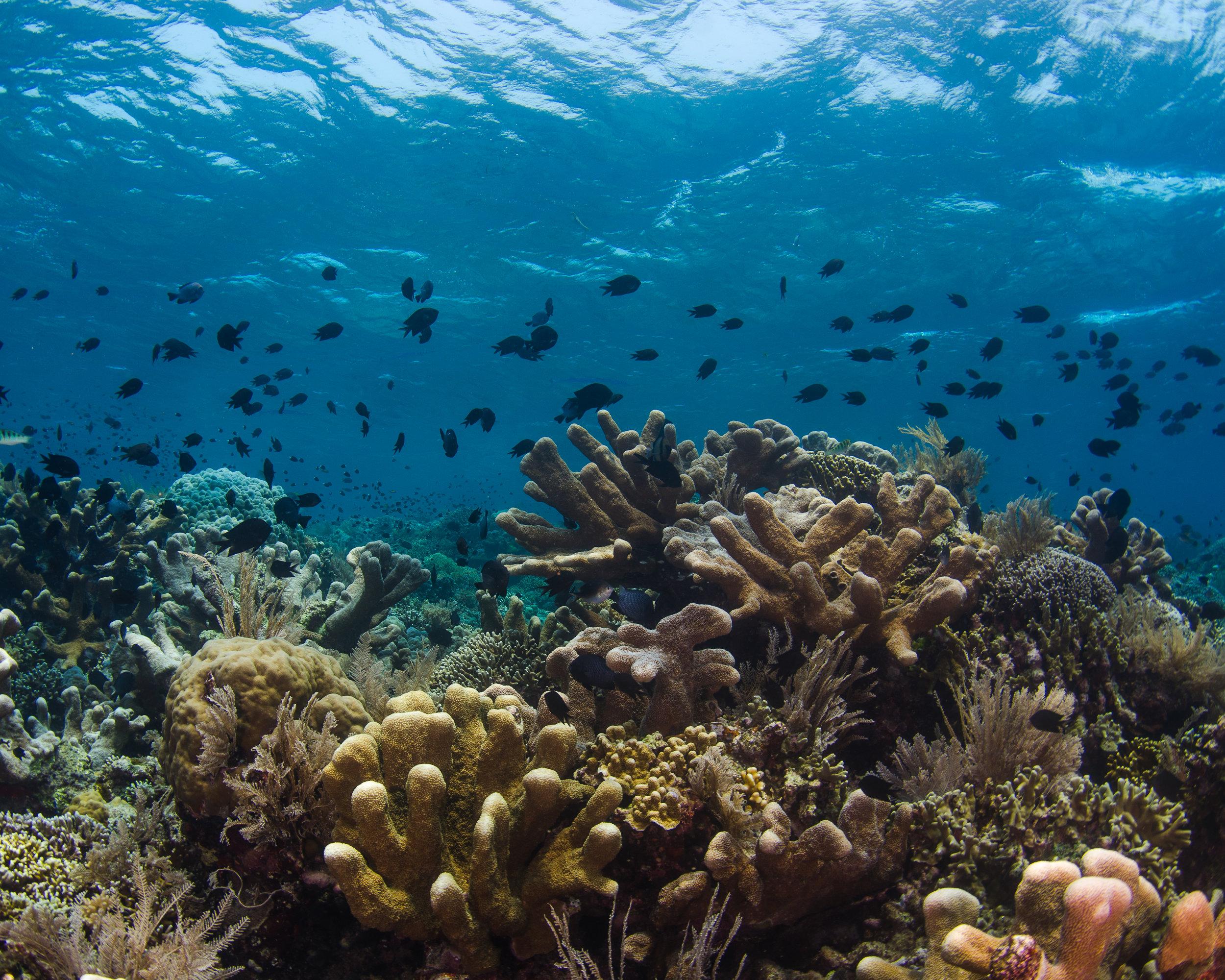 reef top 4.jpg