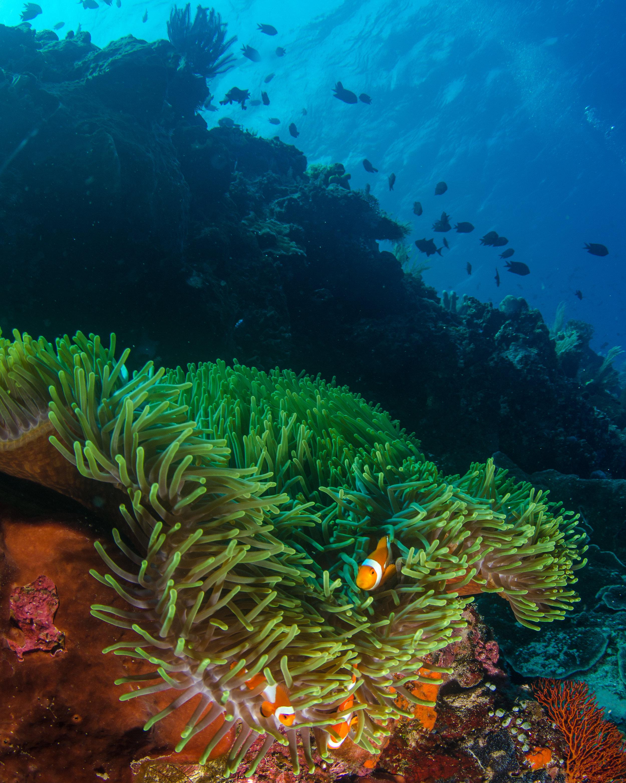 reef top nemo.jpg