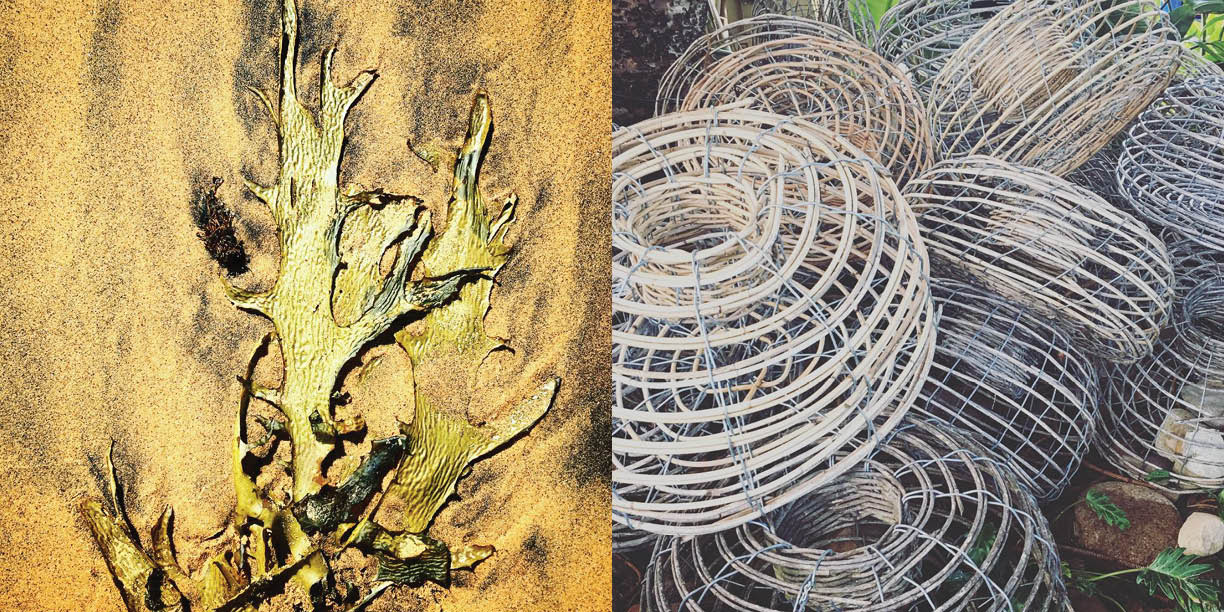 On the beaches, Seaweed and fishing baskets,Photography: Marcus Hay for SMH, Inc