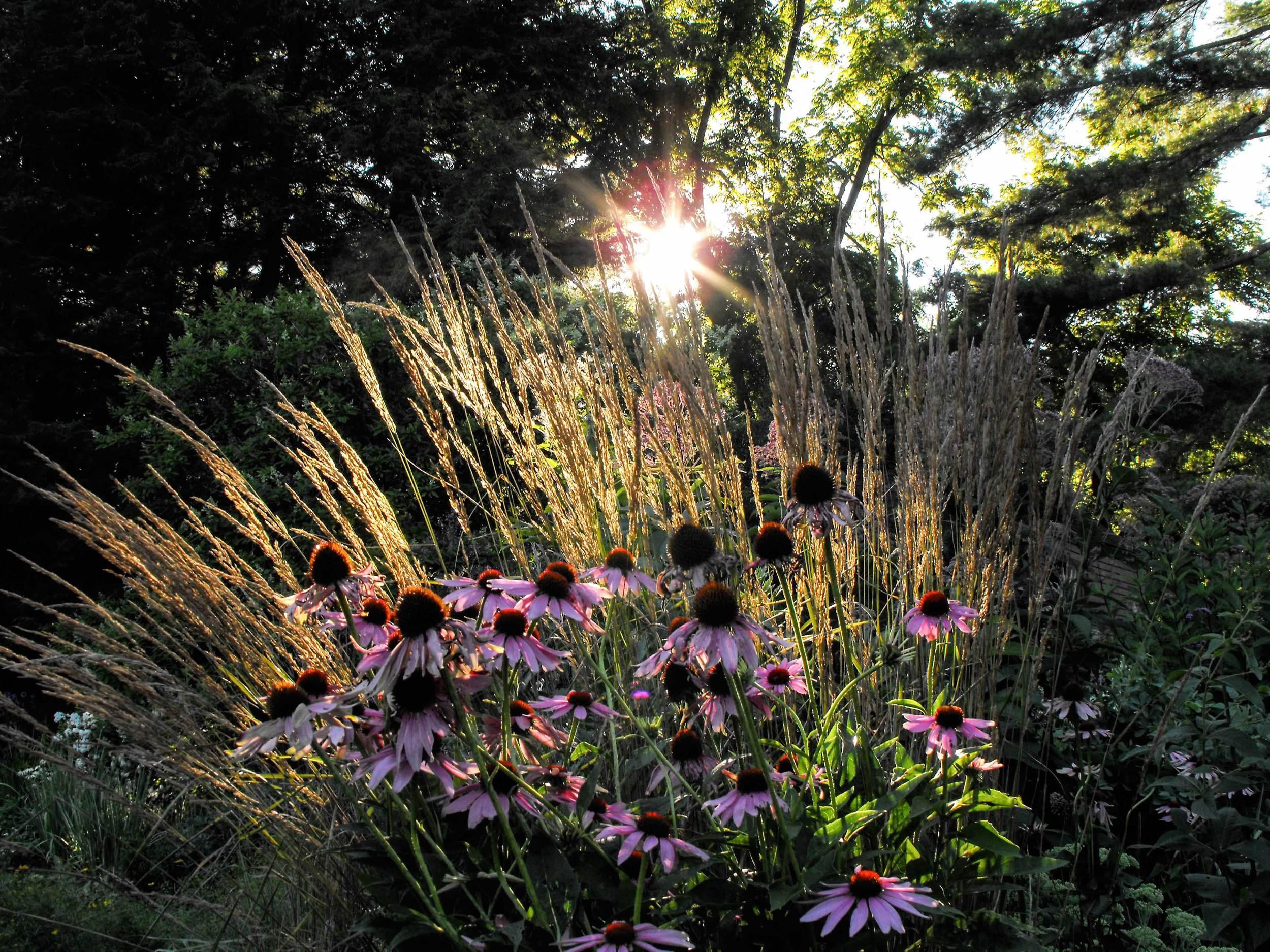 Back-lit-Garden.jpg