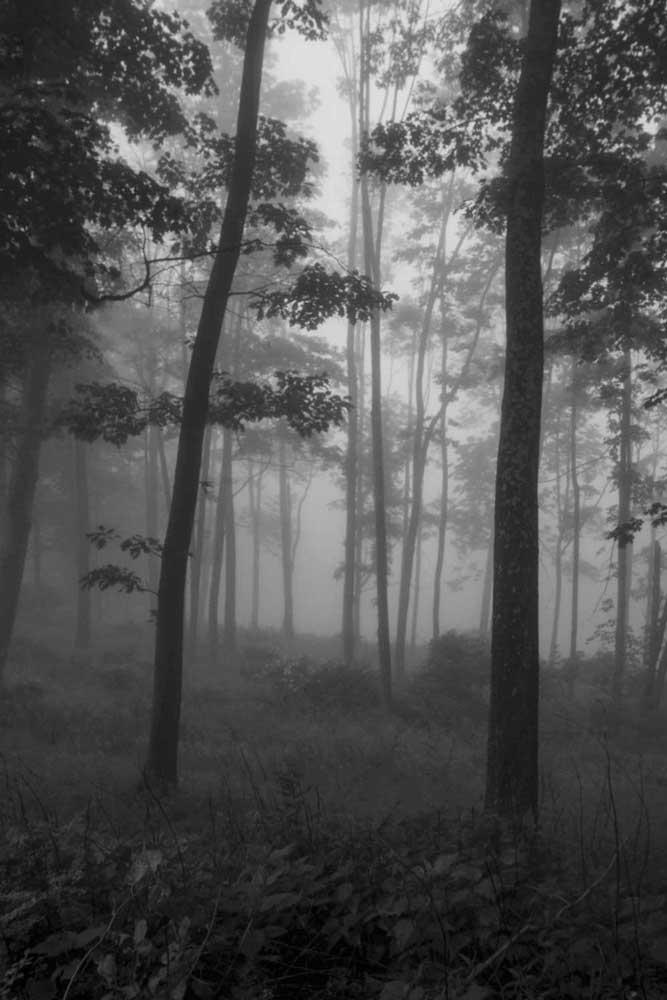 B-&-W-trees3.jpg