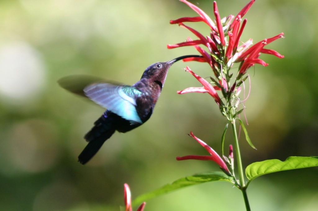 hummingbird2-1024x682.jpg