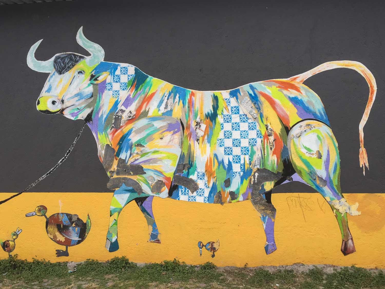 Bull-IMG_5317.jpg