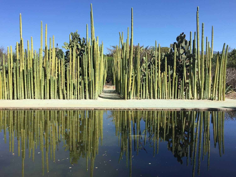 Organo Cacti: Oaxaca Ethnobotanical Garden