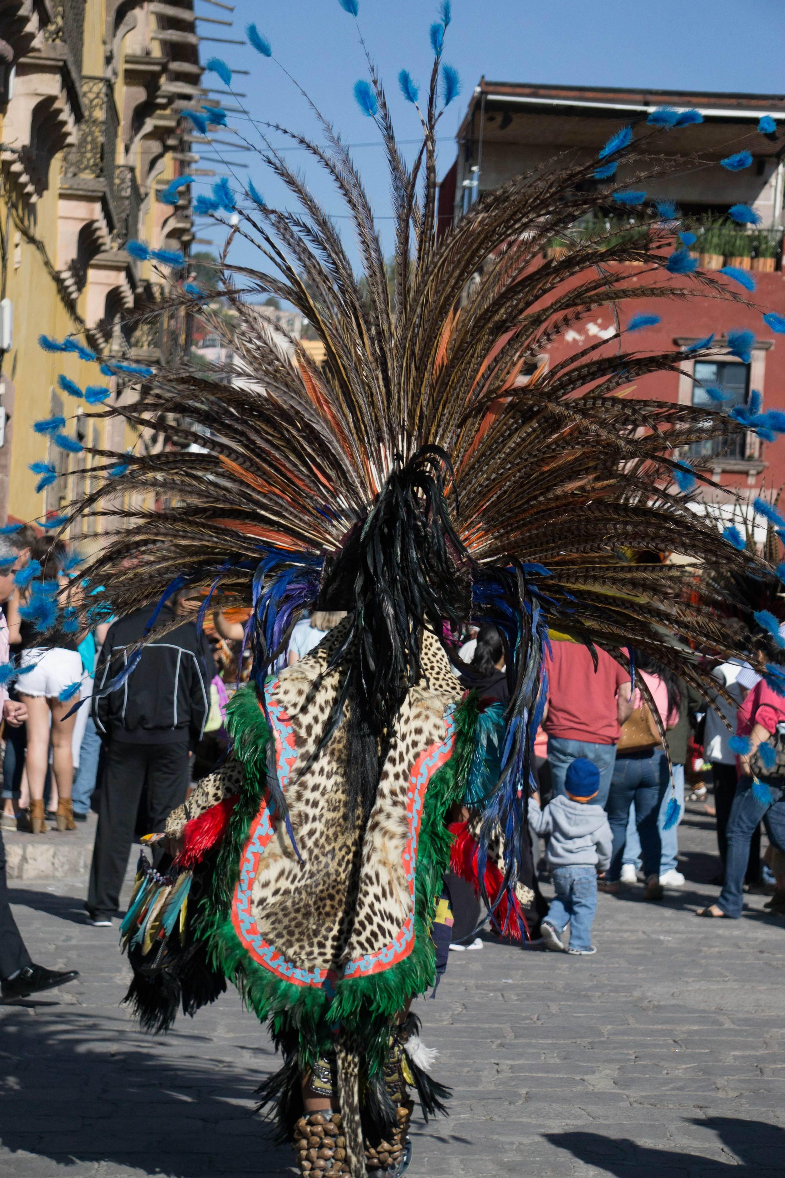 Walking feathersDSC01330.jpg