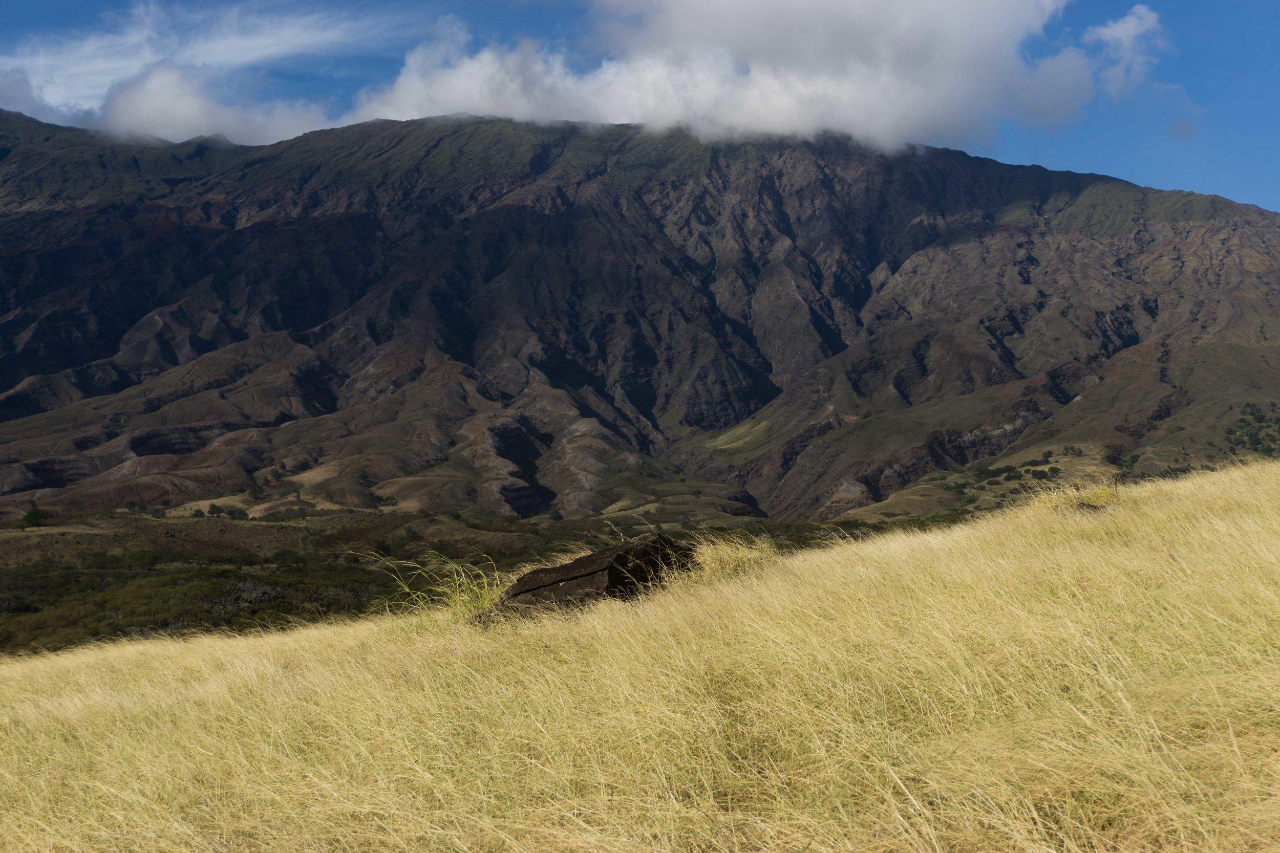 Grass-volcanoDSC03575.jpg