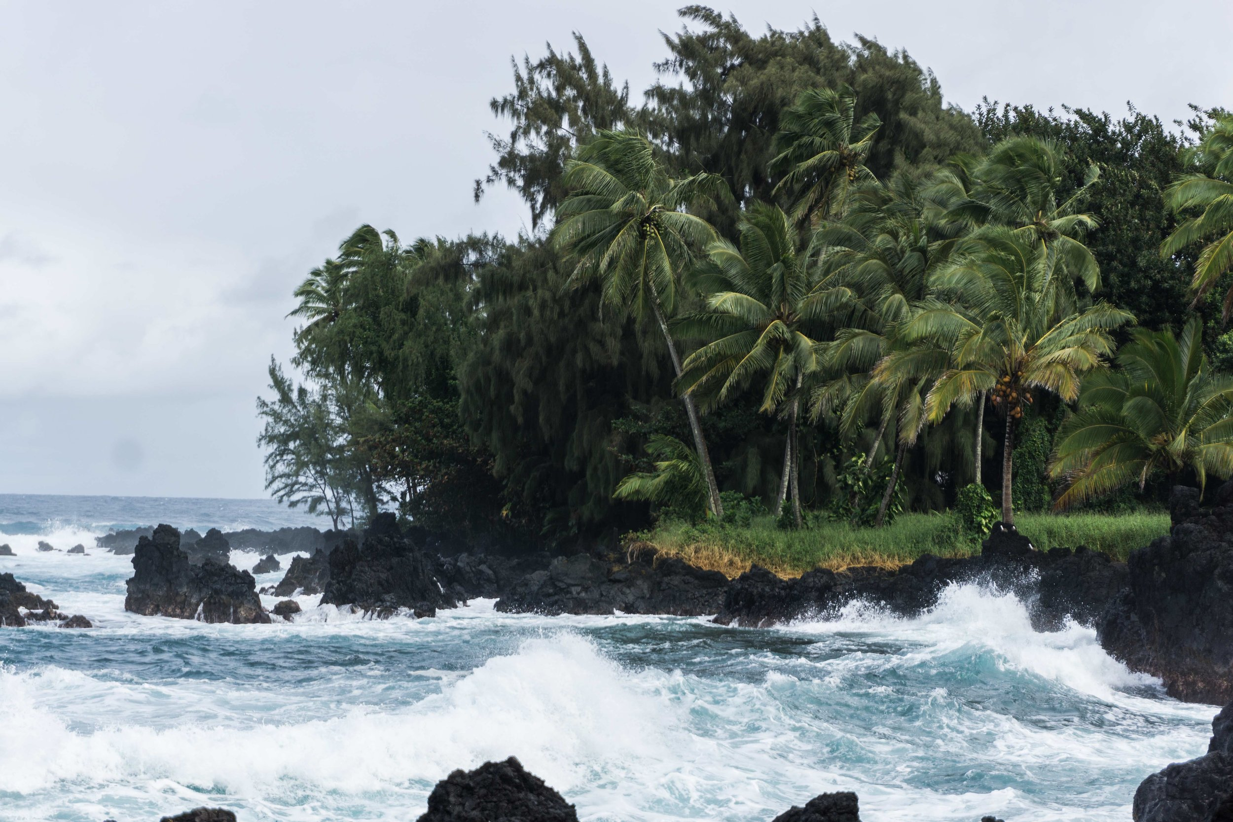 Wild coast DSC03498.jpg