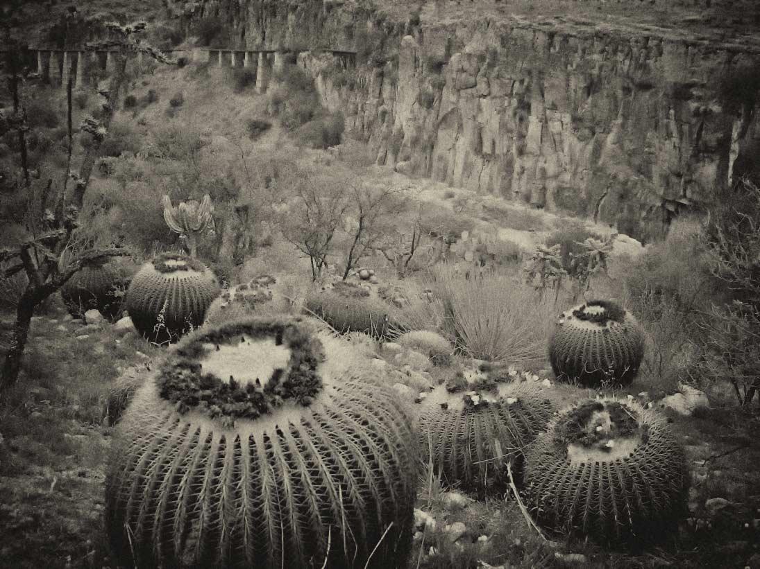 Barrel cactus USE 2 DSCF9044wrkd.jpg