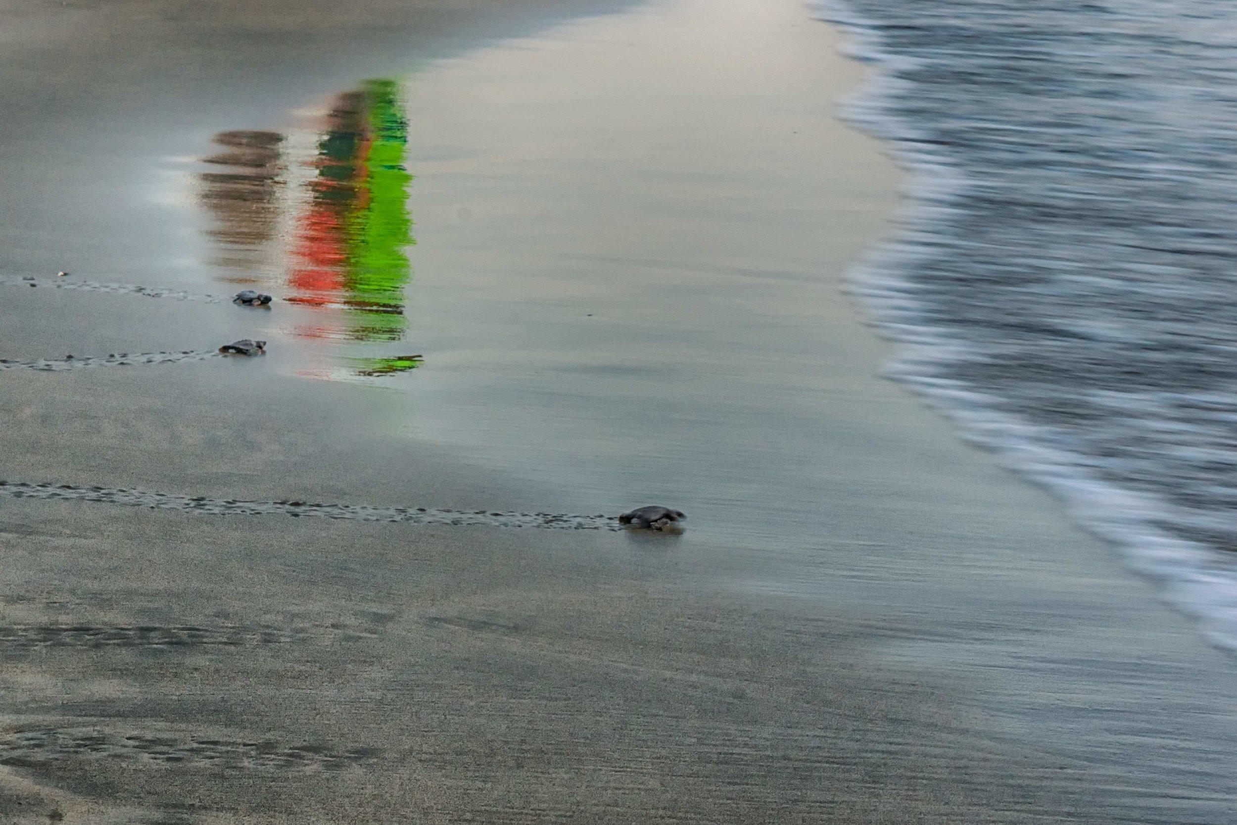Three Turtles returning to the ocean as three people watch