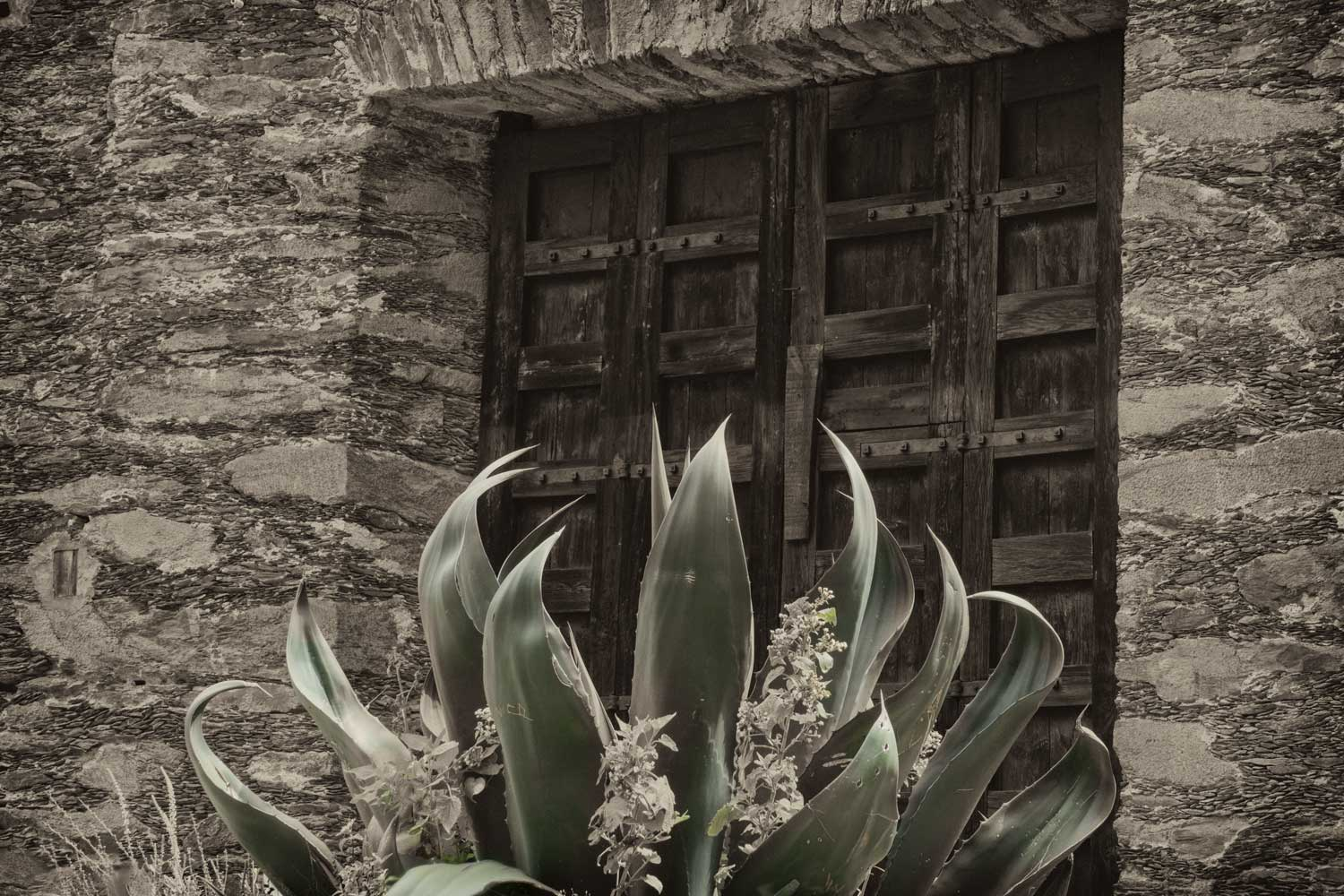 DSC05077.jpg-Small-Agave-and-Door-2.jpg