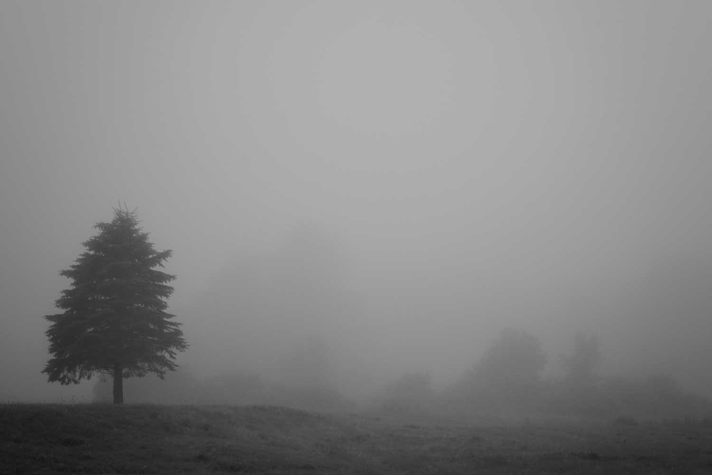 Tree-and-hill-DSC5660.jpg