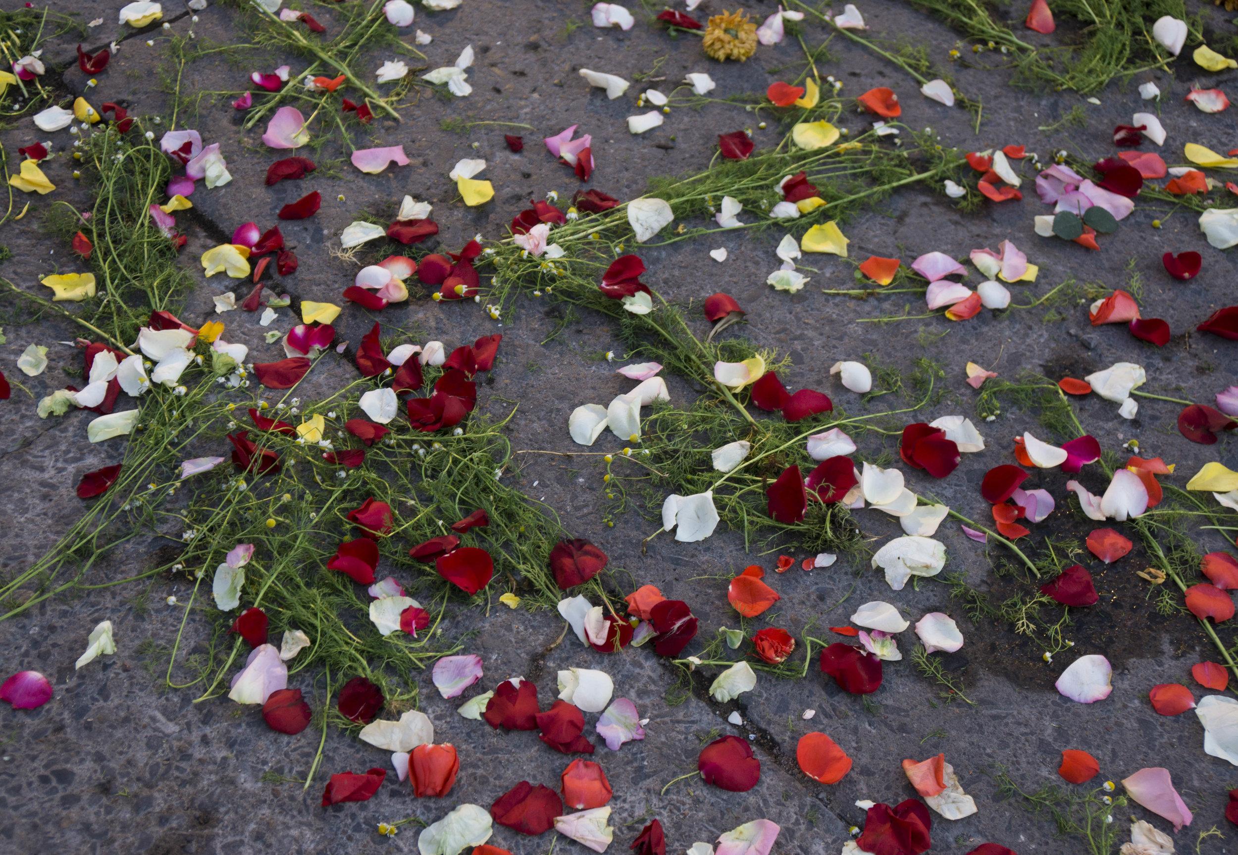 Rose petals_DSC8035.jpg