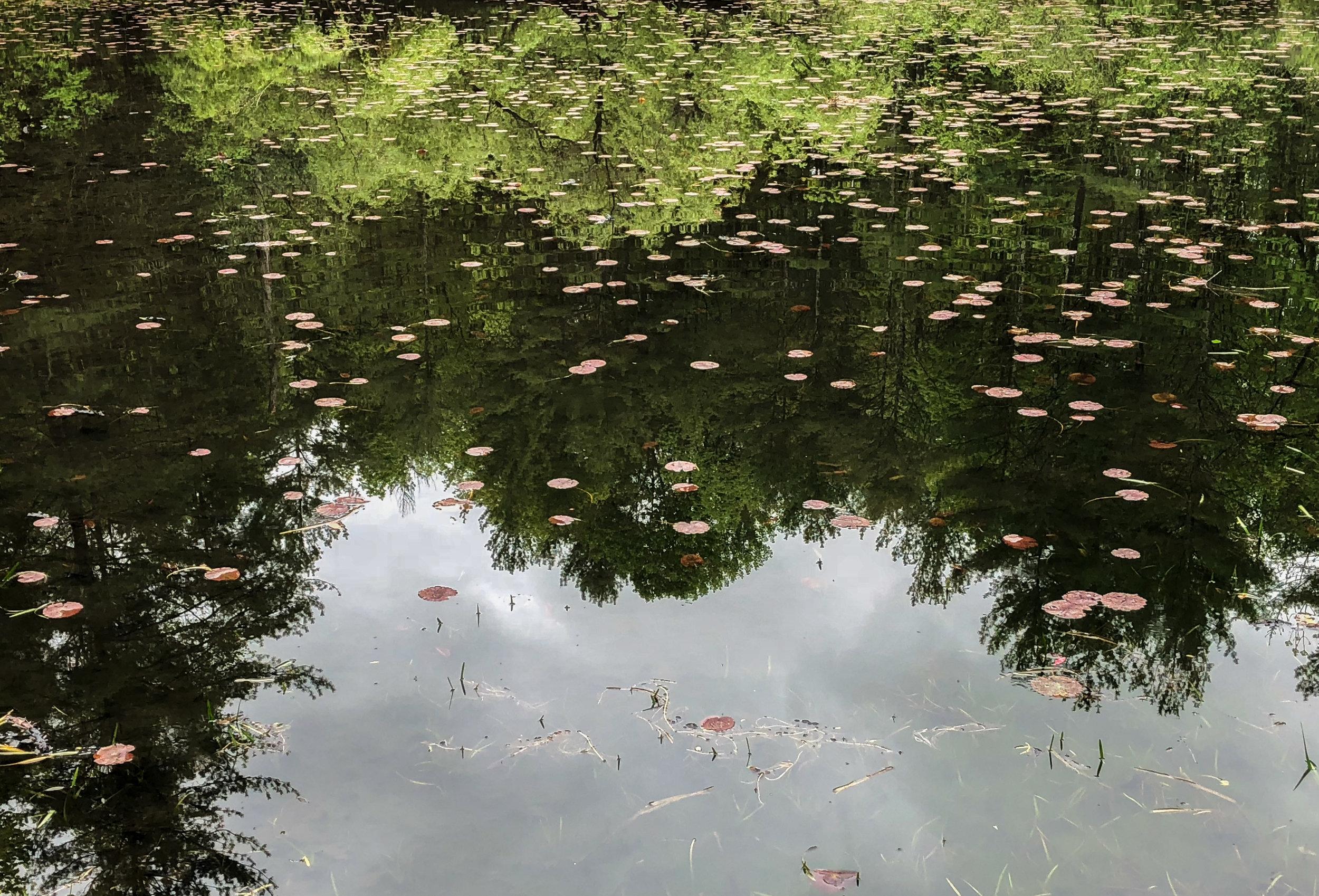 IMG_0185.Pond reflection.jpg