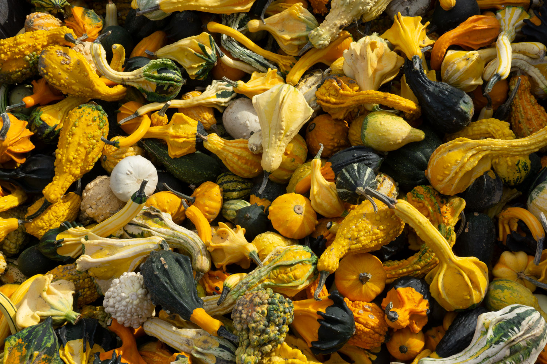 Gourds-DSC03372.jpg