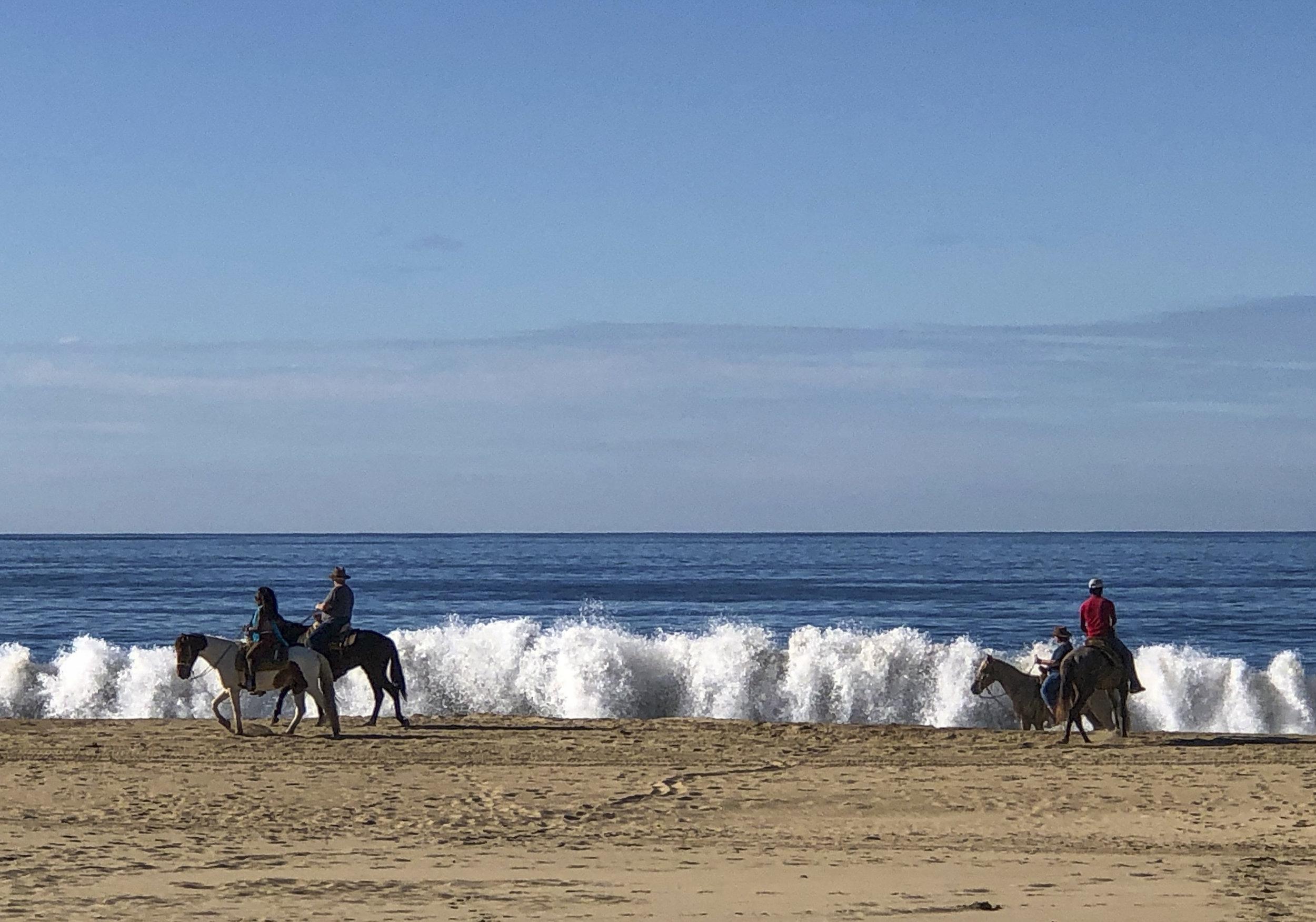 Zihuatanejo horses