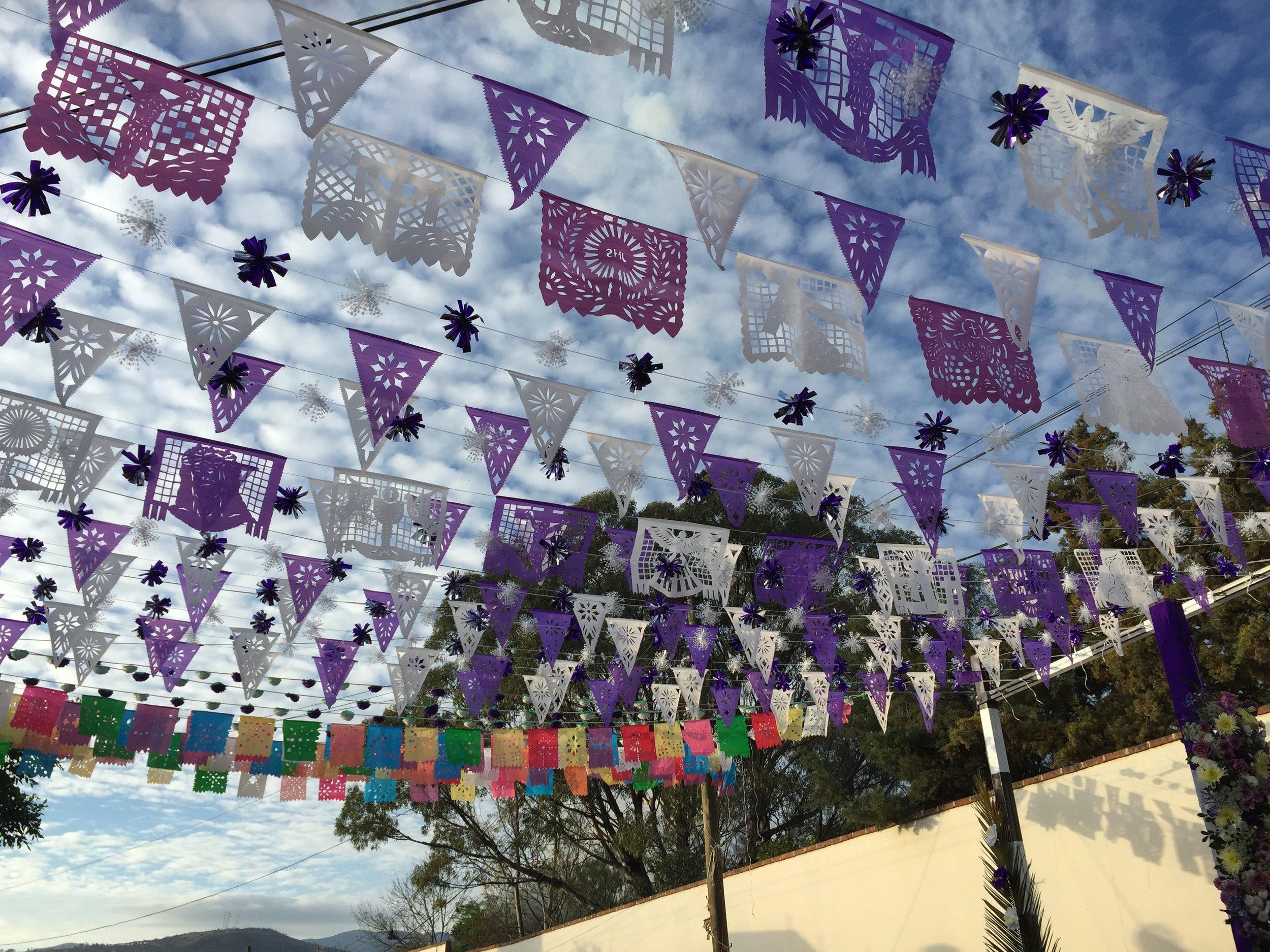 Purple flagsIMG_2866.JPG