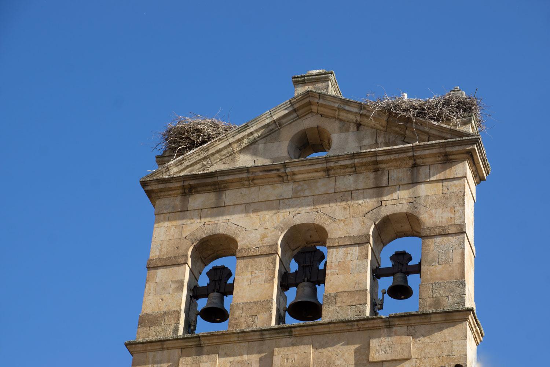 Bells-and-nests_DSC0441.jpg