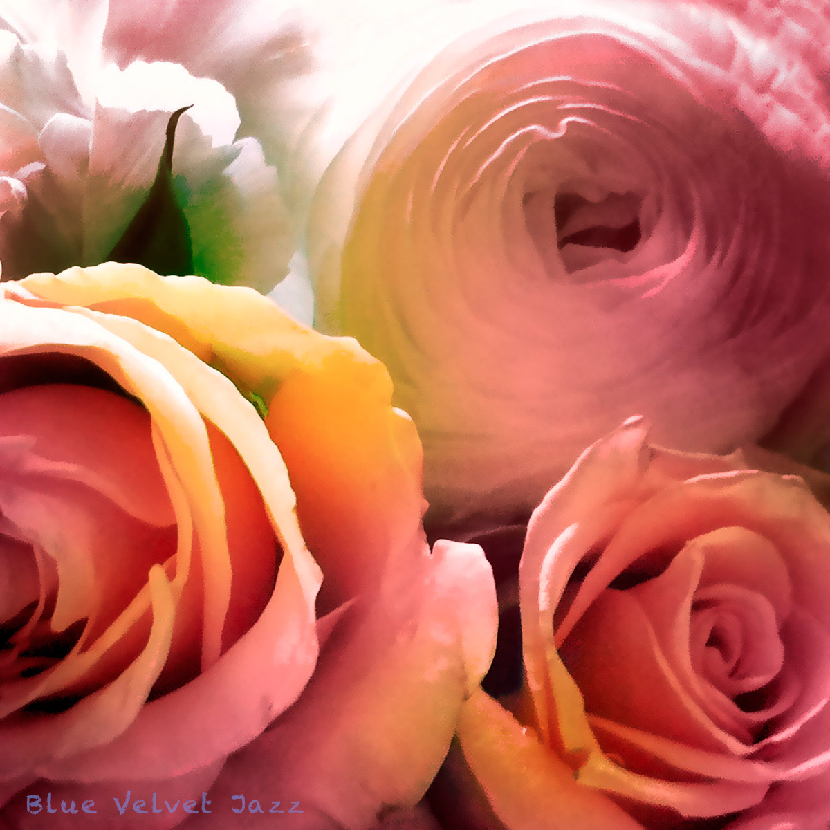 Blue Velvet Jazz flowers 1