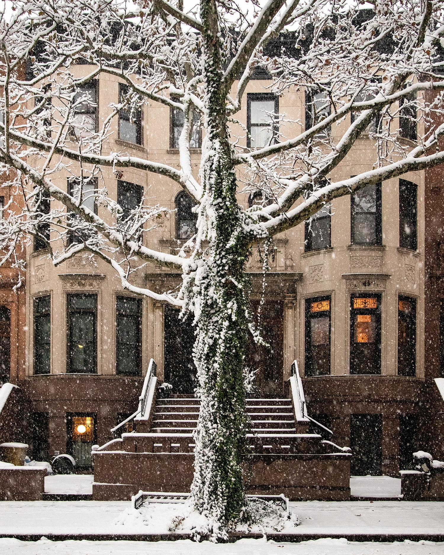 snowy ny small.jpg
