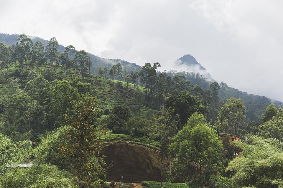 srilanka_29.jpg