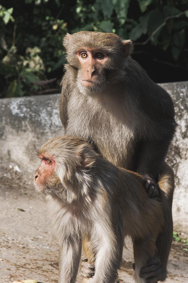 nepal_25.jpg