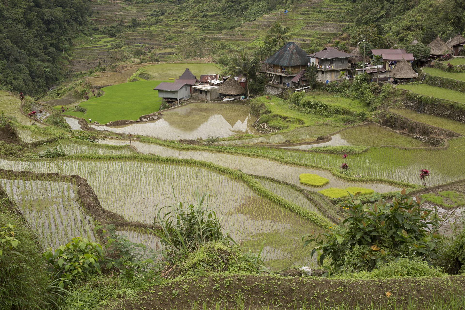 Philippine_2815.jpg