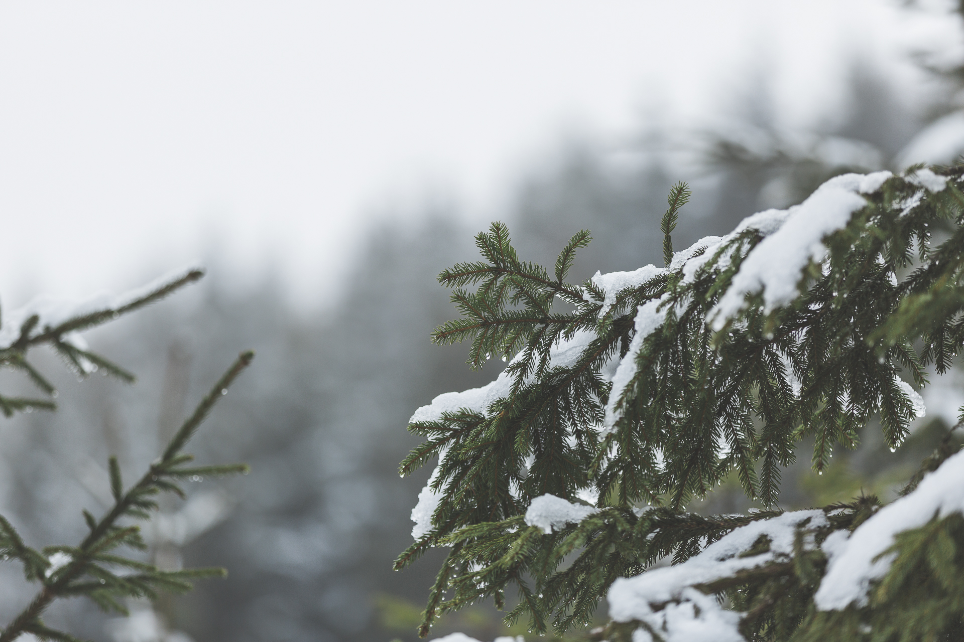 winter_5.jpg