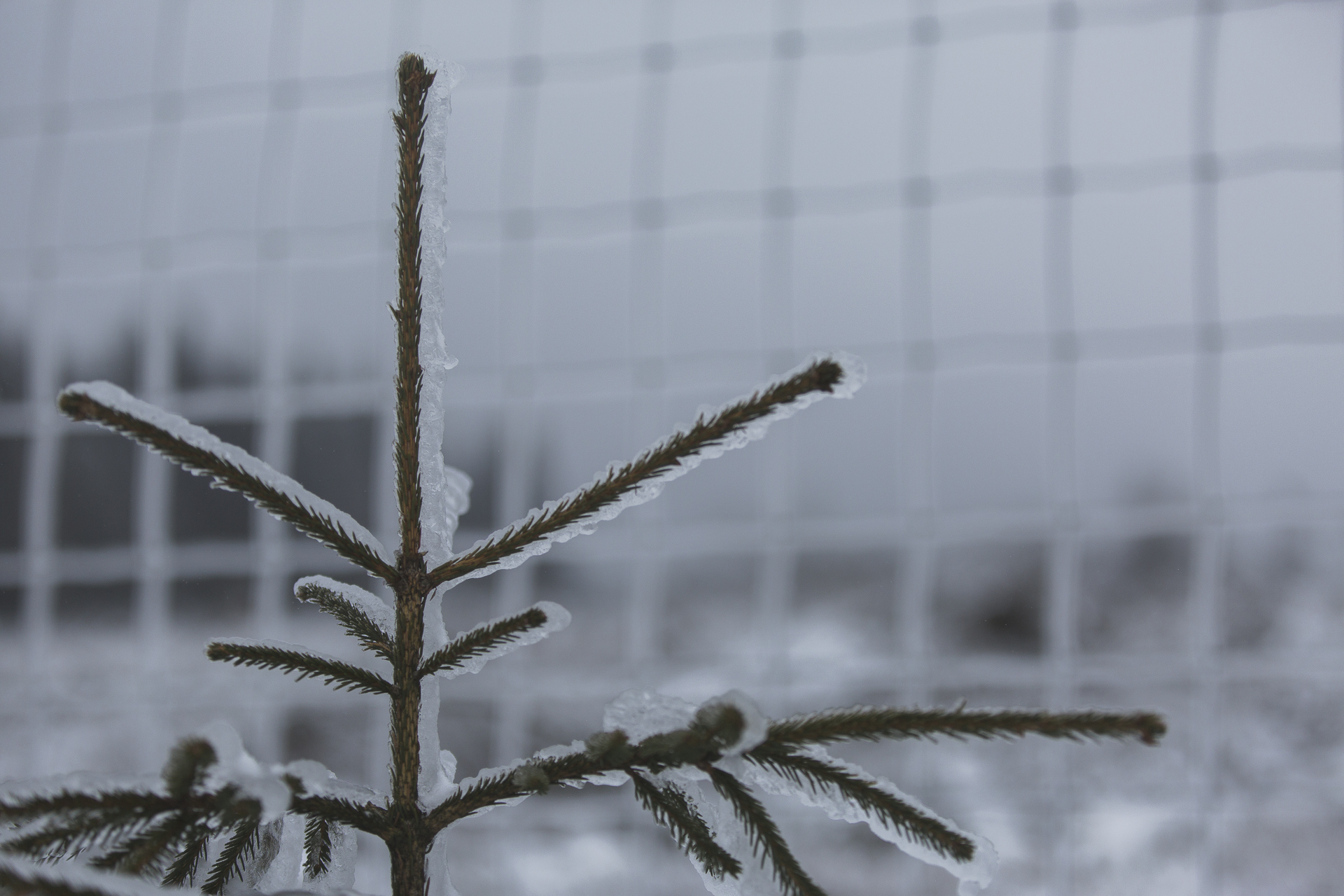 winter_52.jpg