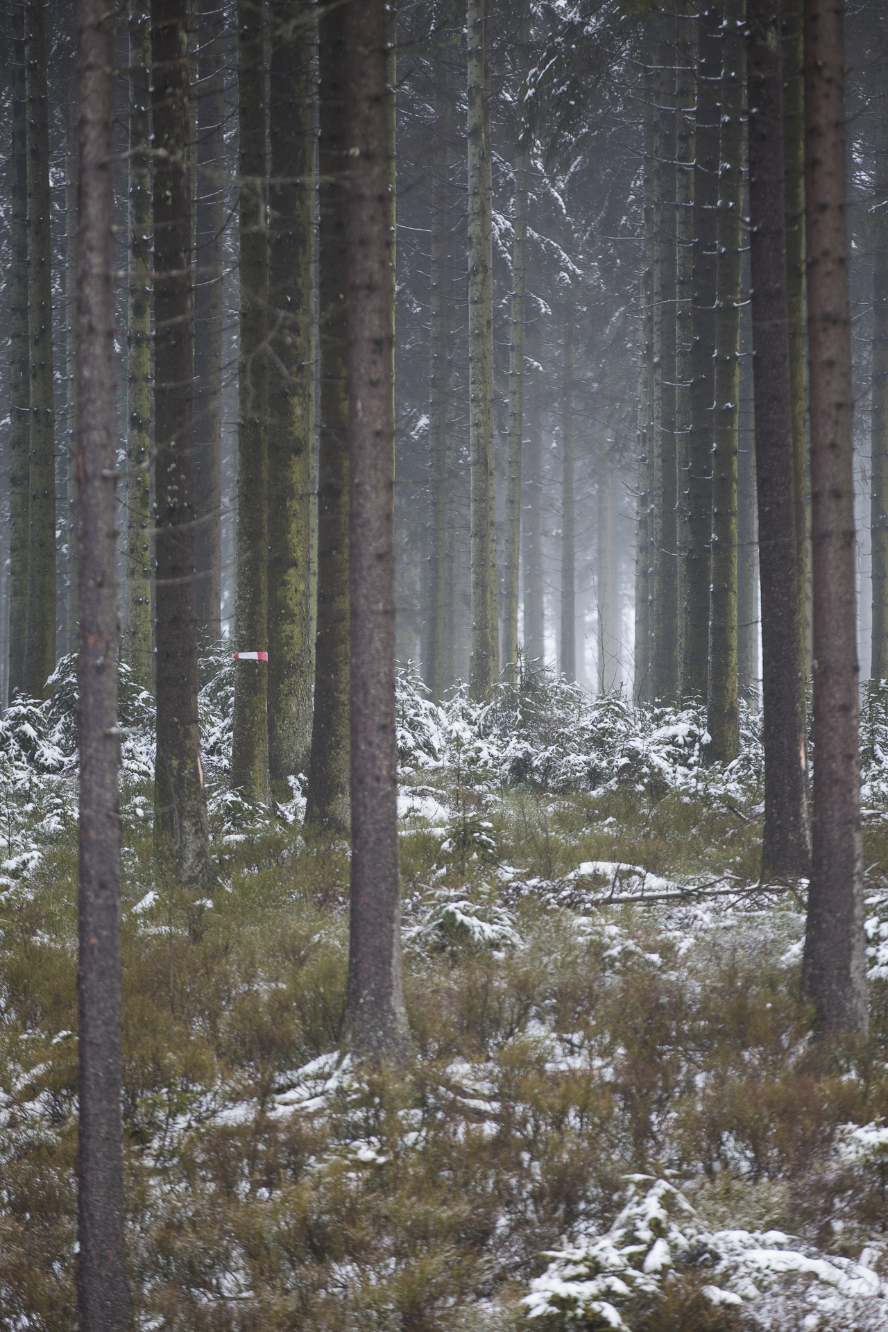winter_6.jpg