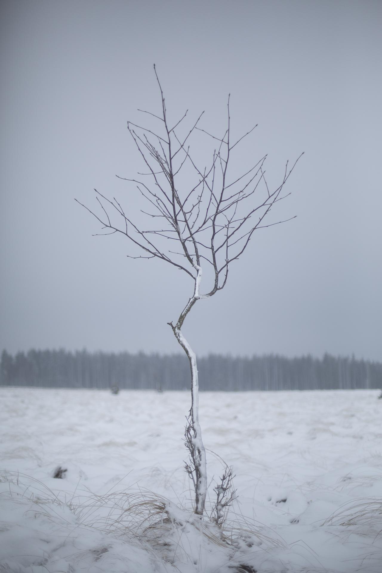 winter_41.jpg