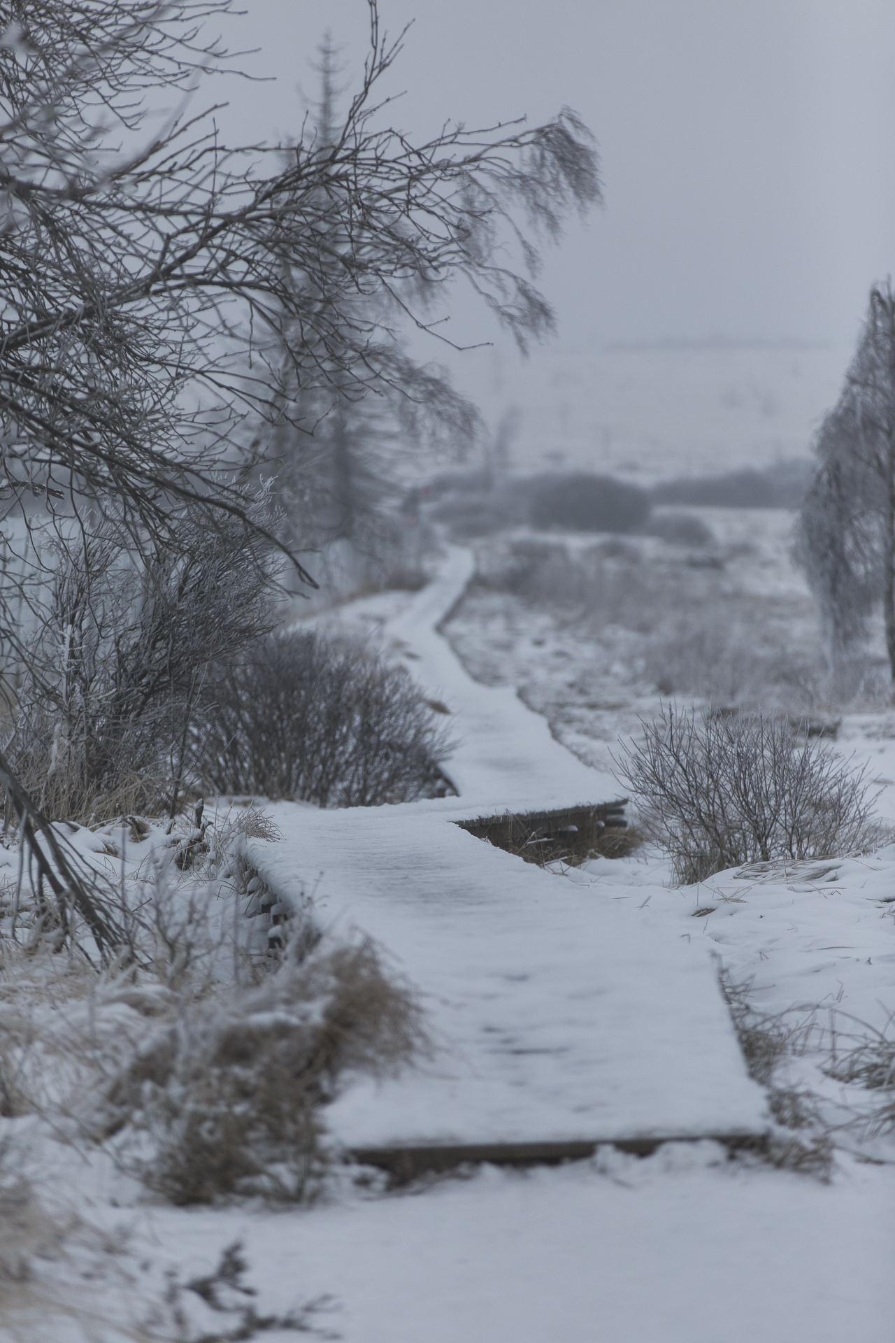 winter_51.jpg