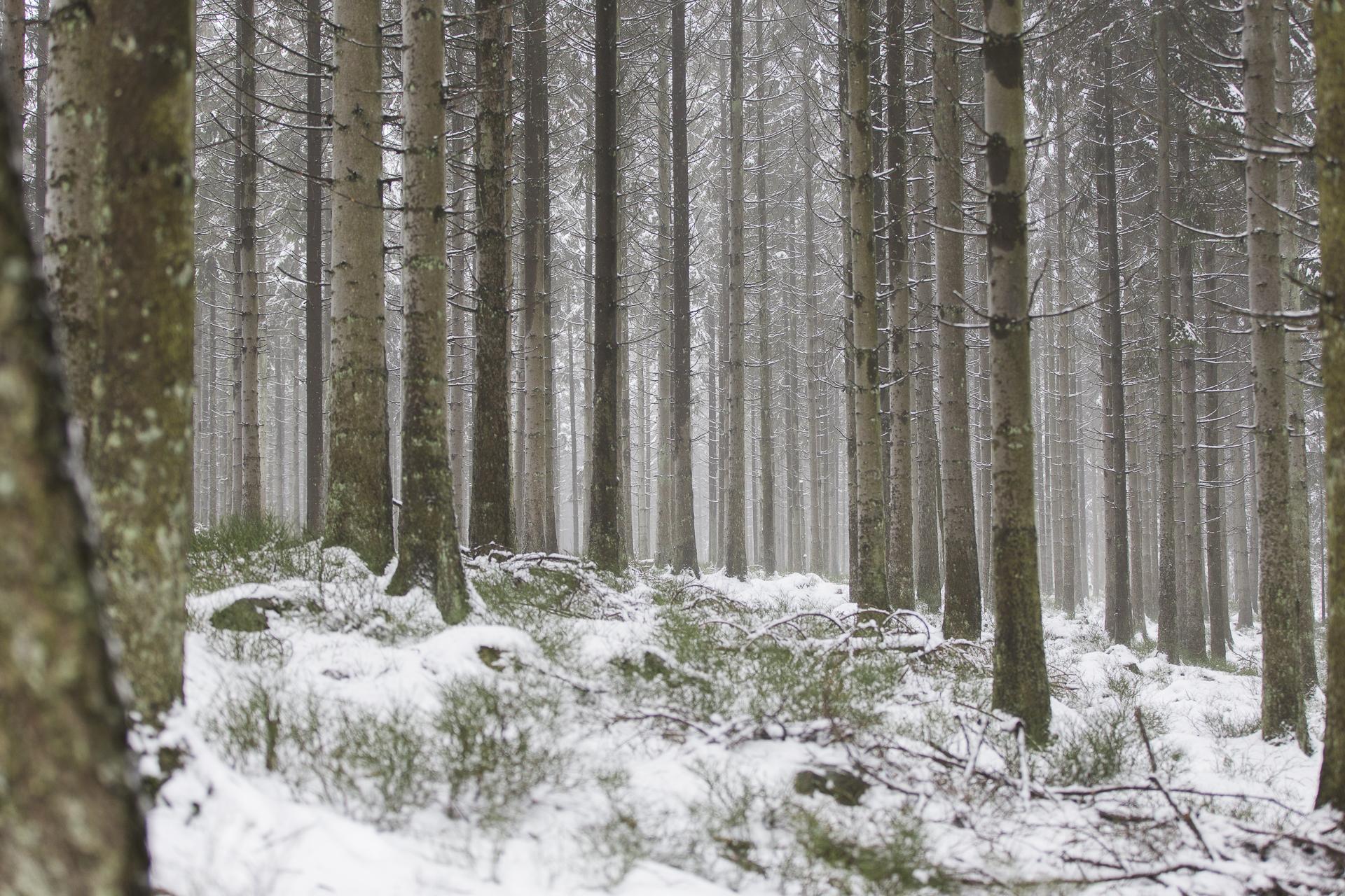 winter_13.jpg