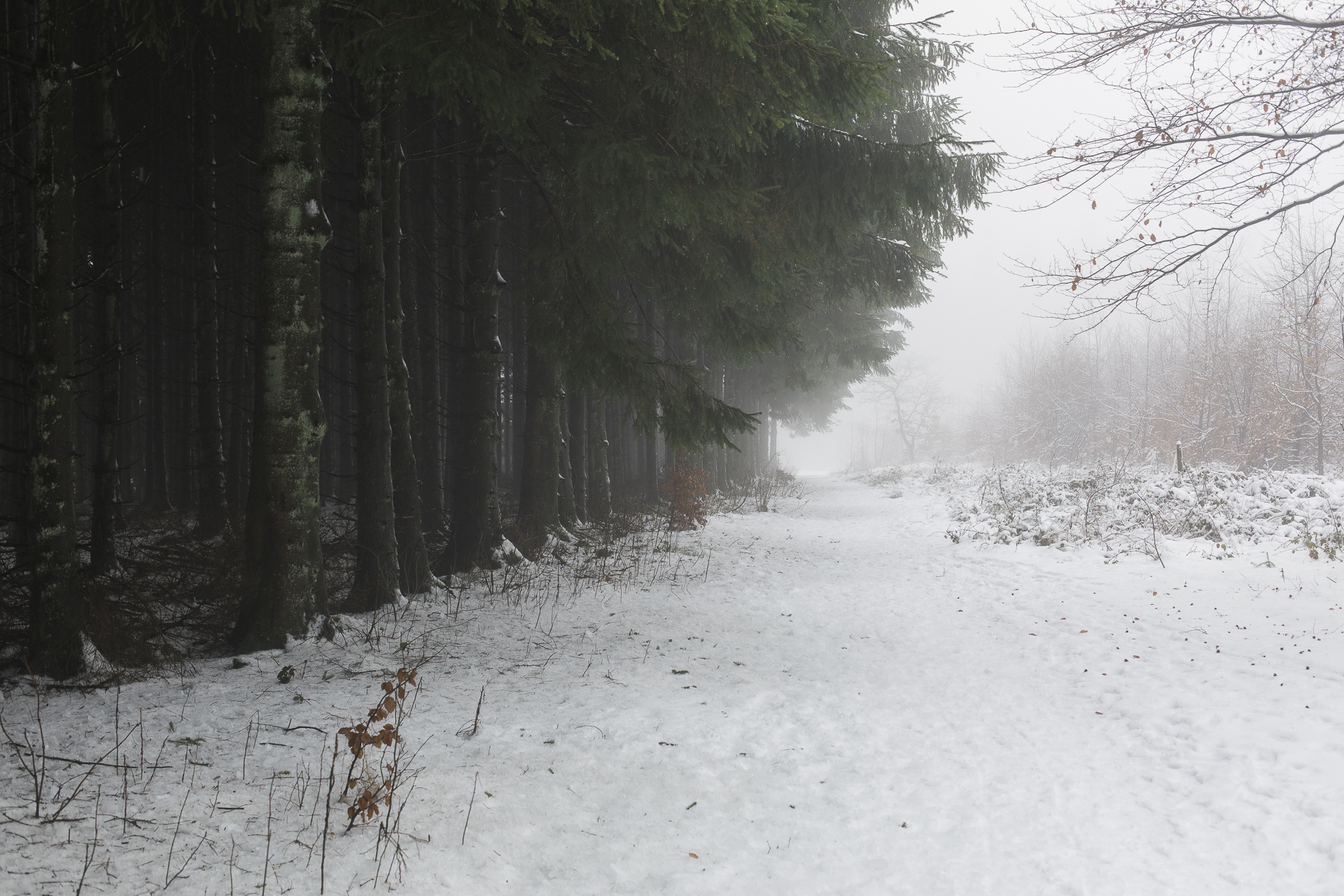 winter_20.jpg