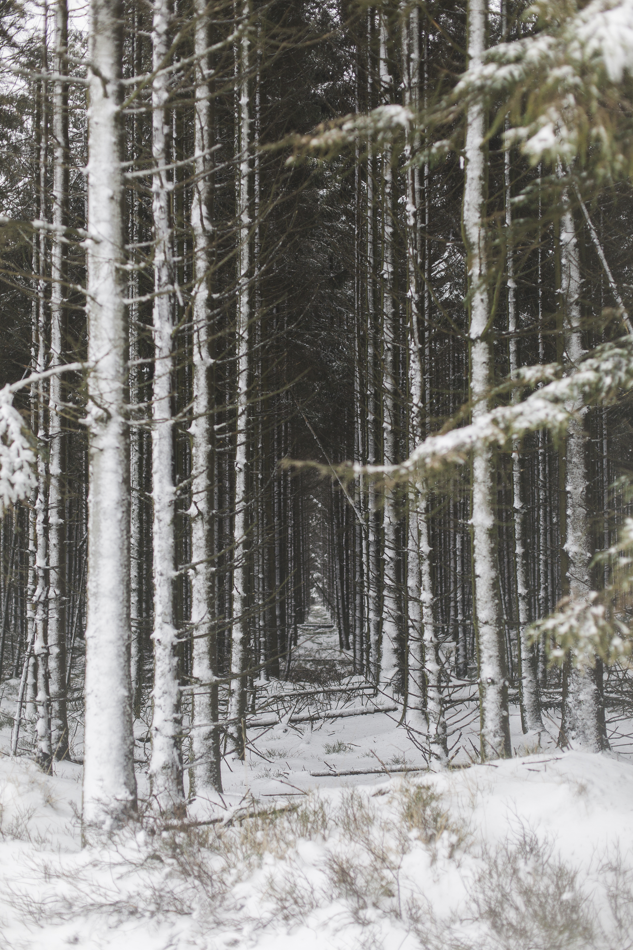 winter_35.jpg