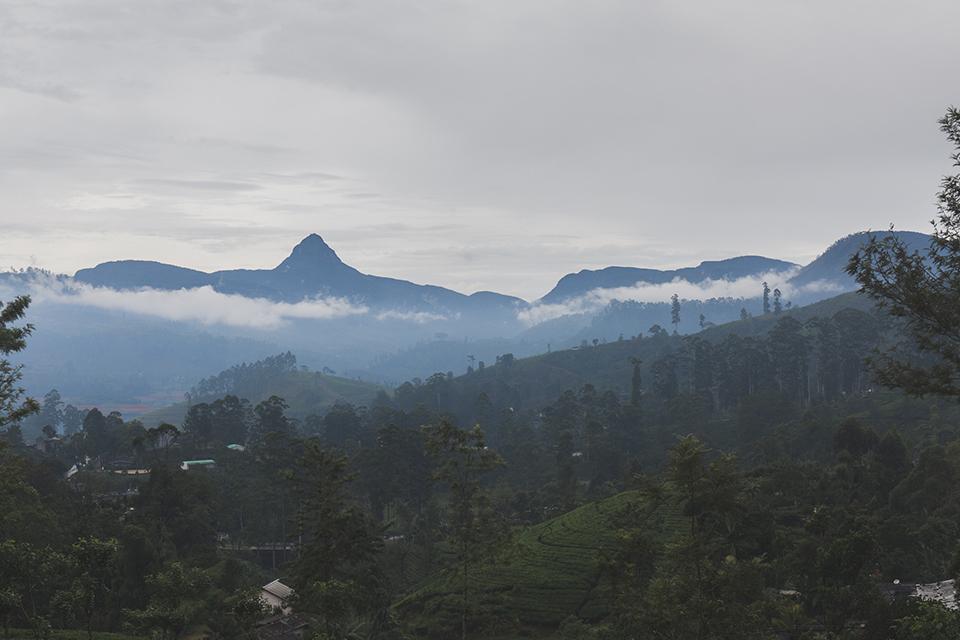 srilanka_6.jpg
