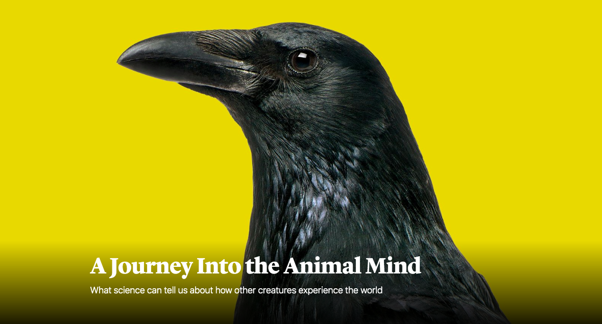 Feature essay on animal consciousness and India's Jains for  The Atlantic 's March 2019 issue.
