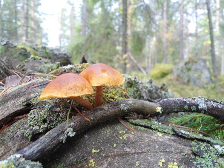 tampere-nordic-walking-tour (1).jpeg