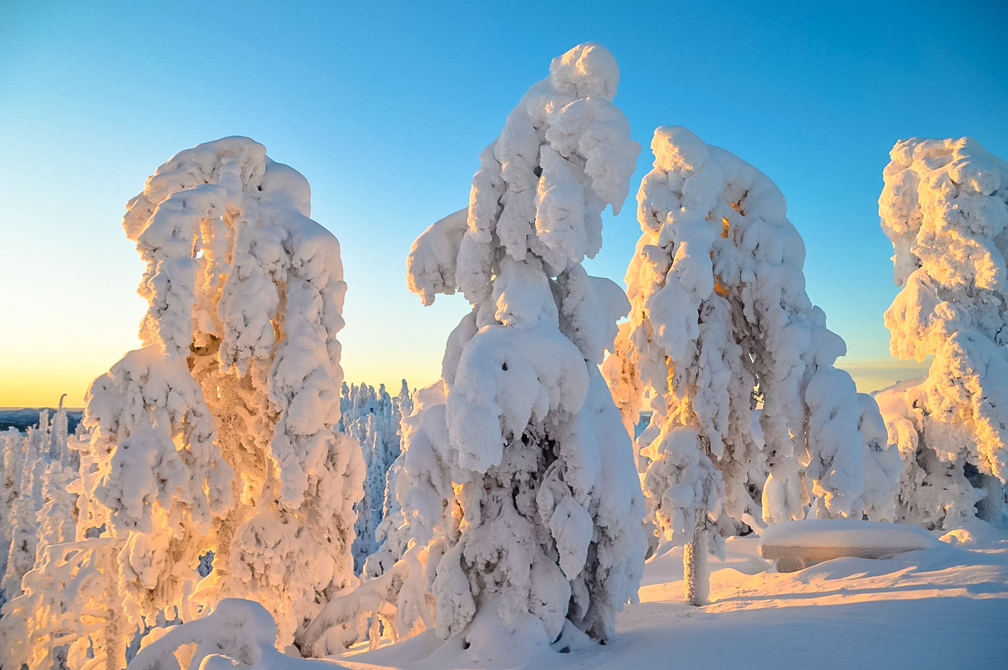 Kuusamo Winter Wonderland