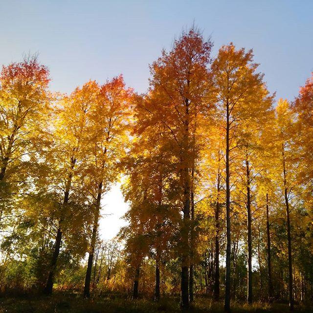 #autumn #colors at #adventureapeslodge in #kuusamo #outdoorslife #naturelovers #youradventureofthelifetimebeginstoday