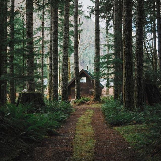 One is never secluded when amongst the beauties of Nature  #PNW #inspiredbynature