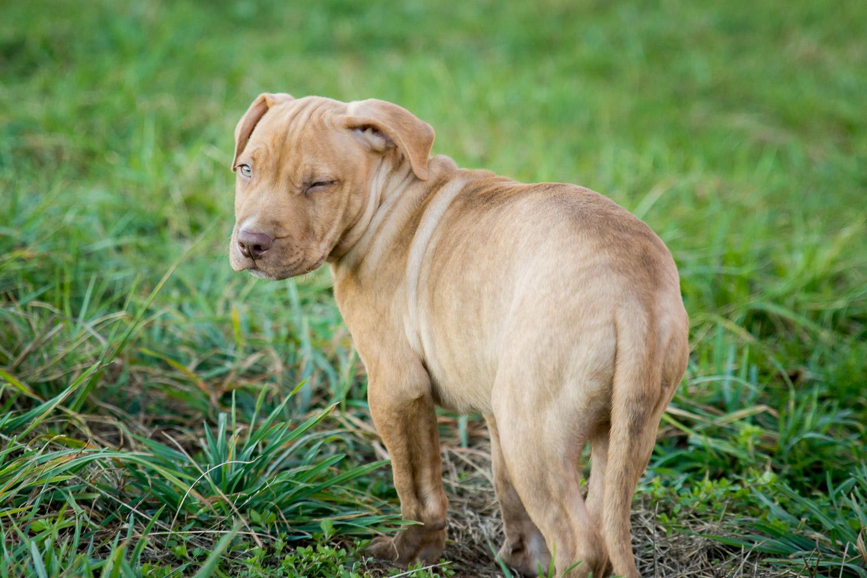 Custom Pet Portraits - Puppy Winking